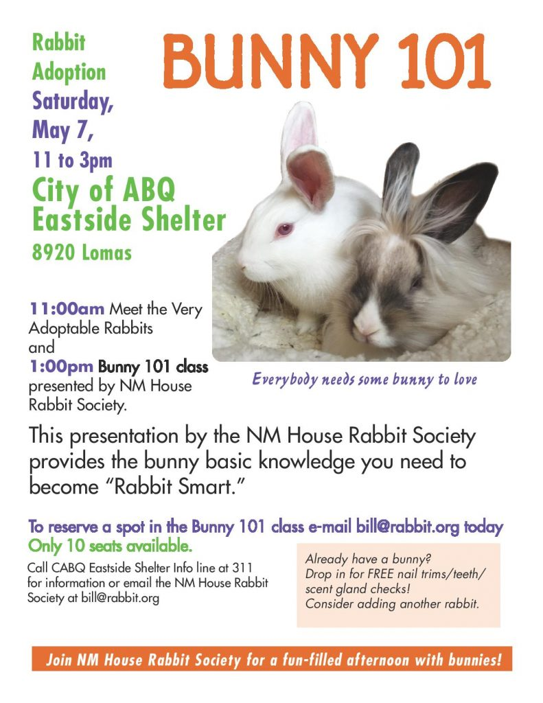 Bunny 101 poster