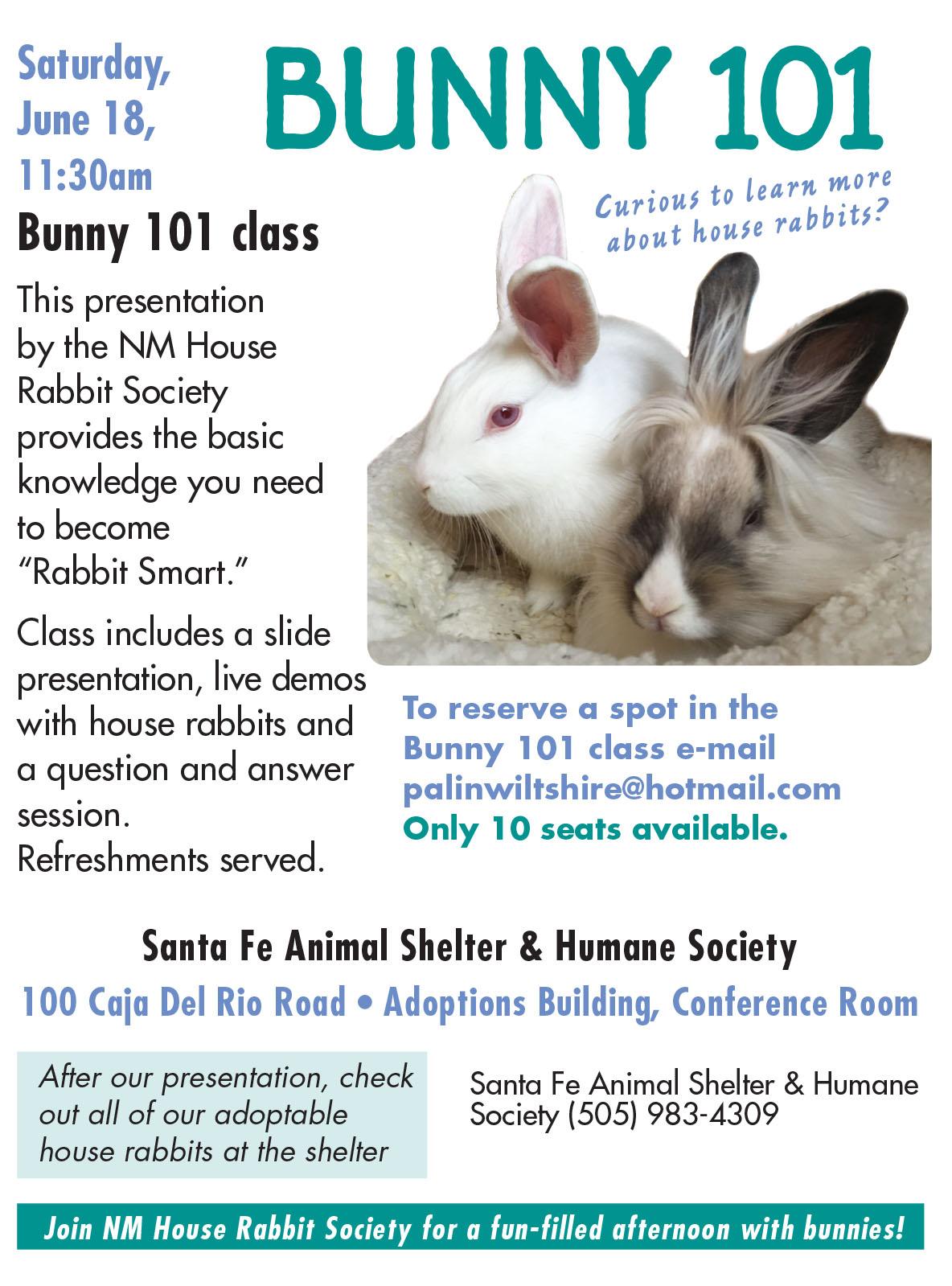 bunny 101 web