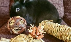 happy bunny with toys